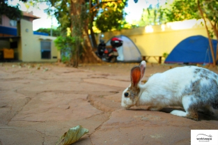 Rabbit in Sleeping Camel, Bamako
