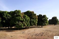 Burkina Faso copy 01 (130)