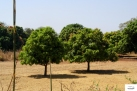 Burkina Faso copy 01 (163)