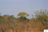 Burkina Faso copy 01 (210)