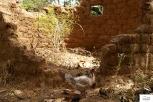 Burkina Faso copy 01 (273)