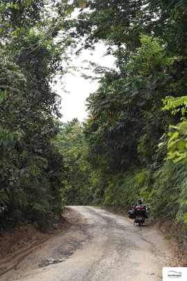 Jungle! / Ζούγκλα