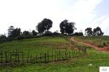 Εικόνες από τη διαδρομή ως τη Yaounde.