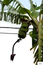 Που πήγε ο νους σας; Μπανάνες είναι!