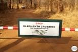 Elephant orphanage outside Lusaka / Ορφανοτροφείο ελεφάντων, λίγα χιλιόμετρα έξω απ' την πόλη.