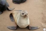 Φωτογραφίζοντας τις φώκιες στο Cape Cross