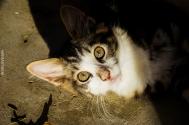 Kitten - Γατάκι