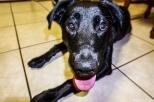 Johann's dog. Lovely girl! - Η σκυλίτσα του Γιόχαν. Έρωτας!