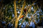 While waiting for Alexandra to finish her visit inside the National Park of Iguazu, I shot some pictures. / Φωτογραφίες που τράβηξα έξω απ' τους καταρράκτες, περιμένοντας την Αλεξάνδρα.