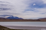 Vicuñas, the wild cousins of llamas, at Lake Hedionda / Vicuñas, τα άγρια ξαδερφάκια των λάμα, στη λίμνη Hedionda