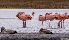 Flamingos at Lake Hedionda / Φλαμίνγκο στη λίμνη Hedionda
