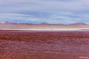 Laguna Colorada (Colored Lake) / Η χρωματιστή λίμνη