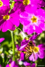 It's spring time! / Ήρθε η άνοιξη! Λουλουδάκια, μελισσούλες...