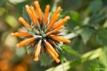 Flowers / Λουλουδάκια