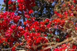 More flowers / Κι άλλα λουλουδάκια